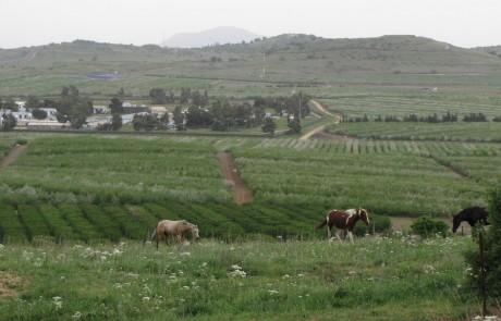 מסלולים בגולן – סיפור הגולן על כל פניו בספר חדש